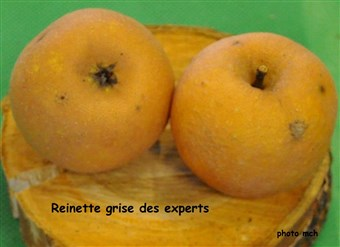 17Reinettegrise experts